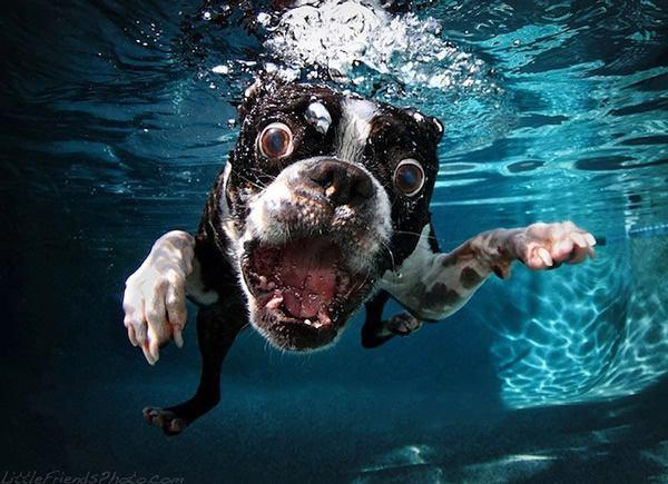 seth_casteel_underwater_dogs2