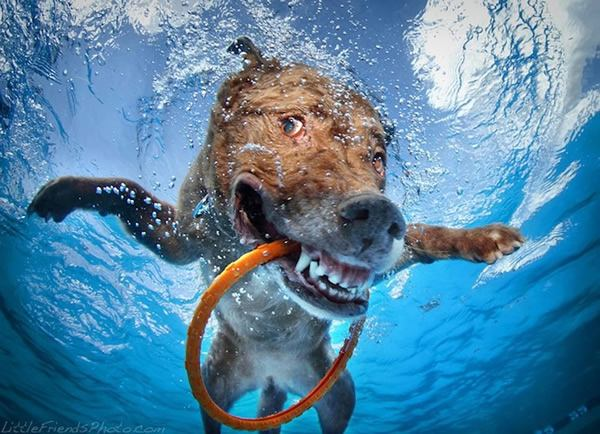 seth_casteel_underwater_dogs3